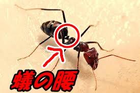ユナ くびれ 蟻の腰