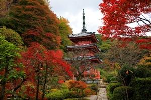 京都 紅葉スポット 三室戸寺