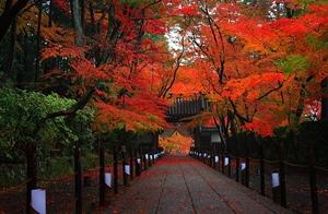 京都 紅葉スポット 光明寺