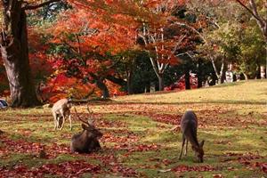 紅葉スポット 奈良公園