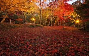 京都 紅葉スポット 府立笠置山自然公園