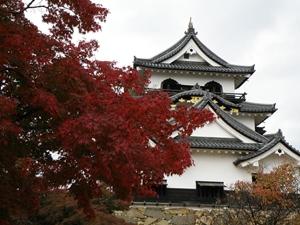 滋賀県 紅葉スポット 彦根城