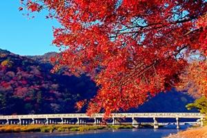 京都 紅葉スポット 渡月橋