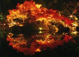 滋賀県 紅葉スポット 玄宮園
