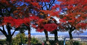 京都 紅葉スポット 石清水八幡宮