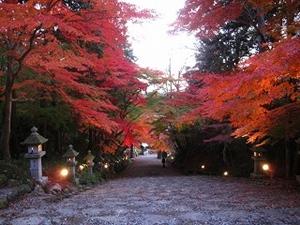 滋賀県 紅葉スポット 胡宮神社