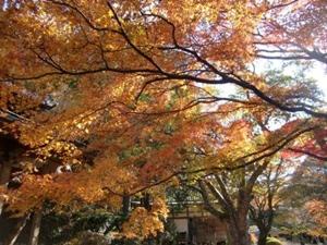 紅葉スポット 花山院