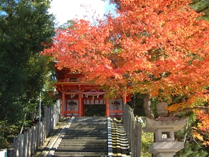 京都 紅葉スポット 金刀比羅神社