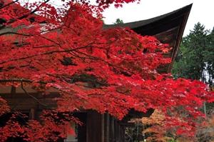 滋賀県 紅葉スポット 金剛輪寺