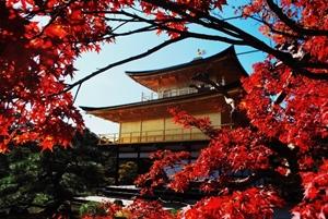 京都 紅葉スポット 金閣寺