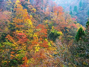 紅葉スポット 霧ヶ滝渓谷