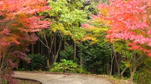 紅葉スポット 高山森林公園