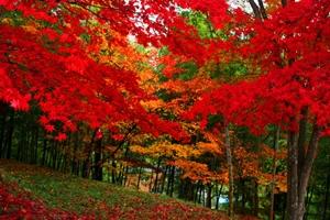 紅葉スポット 最上山公園 もみじ山