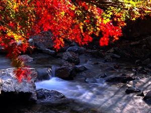 紅葉スポット 福知渓谷