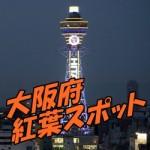 大阪府 紅葉スポット