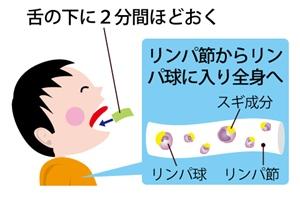 花粉症 舌下免疫療法