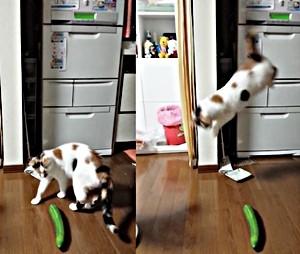 猫 きゅうり ジャンプ