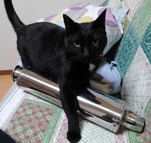 アドレスV125S マフラー猫